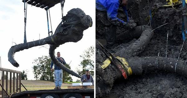 Αγρότης βρήκε σκελετό από μαμούθ στο χωράφι του! (Εικόνες)