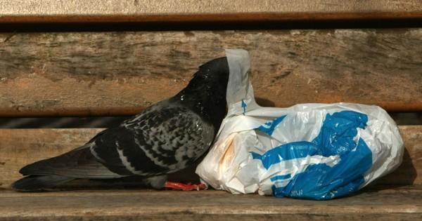 Η καταστροφική μανία της πλαστικής σακούλας (Εικόνες)
