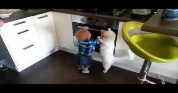Γάτα απομακρύνει μωρό που προσπαθεί να ανοίξει το φούρνο της κουζίνας (video)