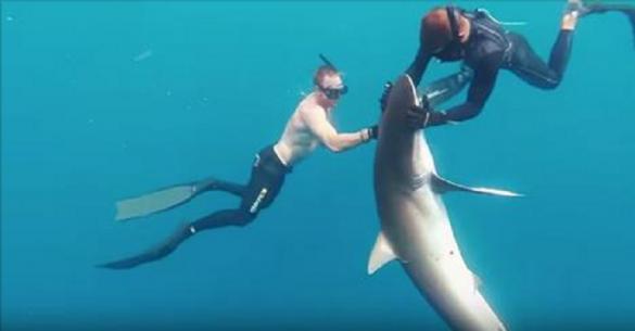 Δύτες κάνουν μασάζ σε ένα καρχαρία για να του αφαιρέσουν έναν γάντζο από το στόμα