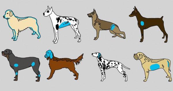 Οι ράτσες σκυλιών με τα μεγαλύτερα προβλήματα υγείας (Εικόνες)