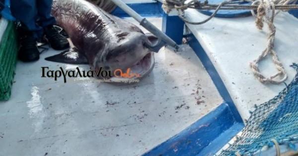 Σήκωσε τα δίχτυα του και είδε αυτό το ψάρι μήκους 2 μέτρων – Δεν πίστευε στα μάτια του (Φωτό)!