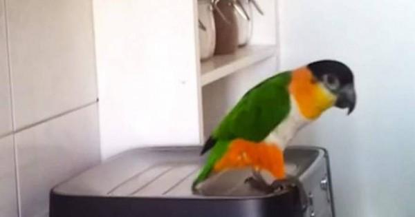 Βάζουν μουσική σε παπαγάλο και χορεύει με ξέφρενες φιγούρες! [βίντεο]