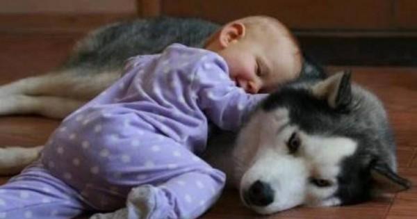 Ο σκύλος που γίνεται …λιώμα για το χάδι του μωρού (βίντεο)
