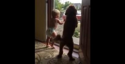 Μωρό και σκύλος ενθουσιάζονται όταν ο μπαμπάς επιστρέφει στο σπίτι (Βίντεο)