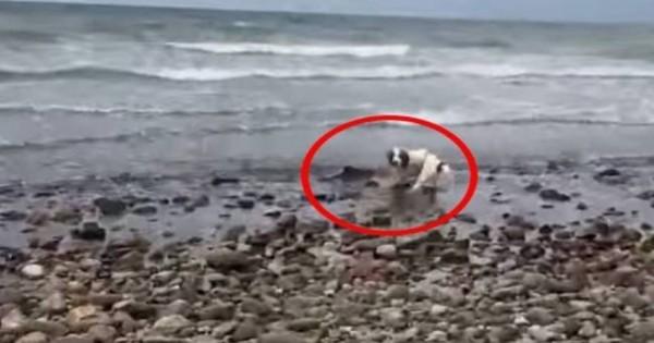 Σκύλος έσωσε τη ζωή μικρού… δελφινιού που ξεψυχούσε σε παραλία! (Βίντεο)