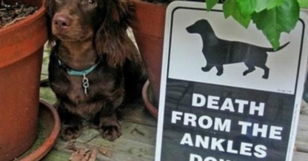 24 ΚΟΡΥΦΑΙΕΣ επιγραφές που ΠΡΕΠΕΙ να δει κάθε ιδιοκτήτης σκύλου, η νο.12 με εκφράζει ΑΠΟΛΥΤΑ! (Εικόνες)