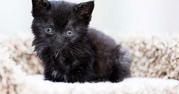 Υπάρχει λόγος που αυτό το γατί ονομάστηκε «Θαύμα» (Φωτογραφίες)