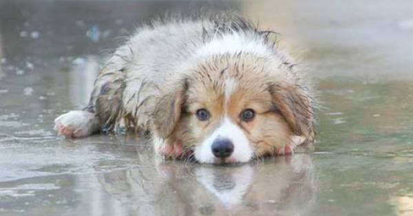 Κάποιος άφησε αυτόν τον σκύλο έξω ενώ έβρεχε… Δείτε τι έγινε στη συνέχεια. (Βίντεο)