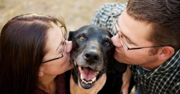 Η τελευταία φωτογραφία με τον σκύλο τους (Εικόνες)