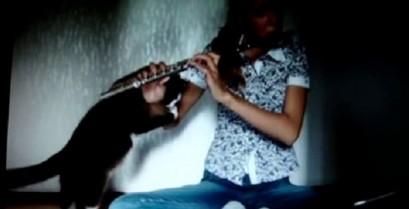 Η γάτα μισεί το φλάουτο (Βίντεο)