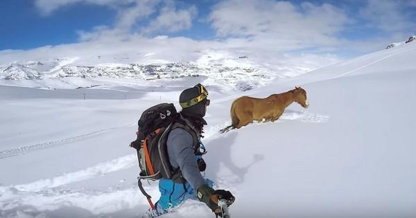 Σνόουμπορντερς σώζουν άλογο εγκλωβισμένο στο χιόνι! (Βίντεο)