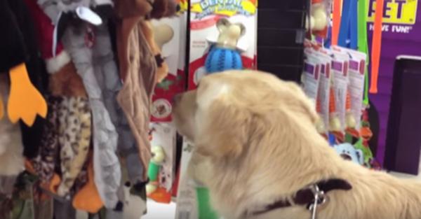 Είπαν σε αυτή τη σκυλίτσα να διαλέξει ότι παιχνίδι θέλει! Η αντίδρασή της; Θα σας θυμίσει τα παιδικά σας χρόνια… (Βίντεο)