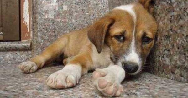 Έβαλαν μια κρυφή κάμερα σε ένα αδέσποτο σκύλο. Αυτό που κατέγραψαν, ραγίζει καρδιές… (Βίντεο)