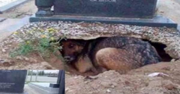 Ο πιο πιστός σκύλος στον πλανήτη – Ζούσε σε λάκκο μέσα…στον τάφο του αφεντικού του! (φωτο)