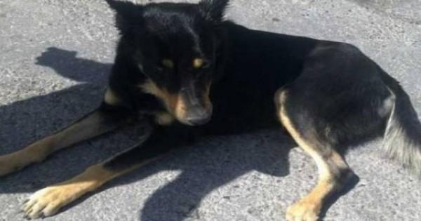 Ηράκλειο: Χαμός στο facebook με τον σκύλο που… μυρίζεται τα τροχαία ατυχήματα [βίντεο]