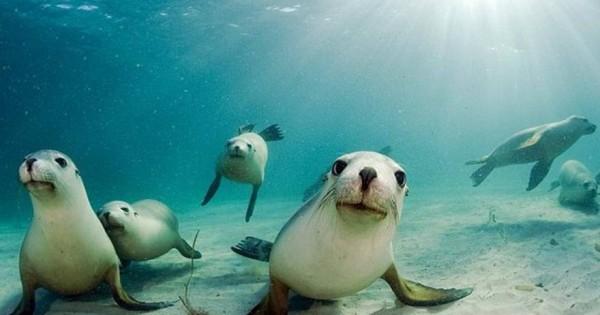 Εντυπωσιακό αποτέλεσμα από κάμερα GoPro σε θαλάσσιο λιοντάρι [βίντεο]