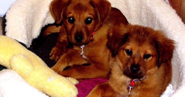 Έπρεπε να αφήσουν τους σκύλους τους όταν μετακόμιζαν. 4 χρόνια μετά όμως δέχτηκαν ένα τηλεφώνημα που τα άλλαξε όλα. (Εικόνες)
