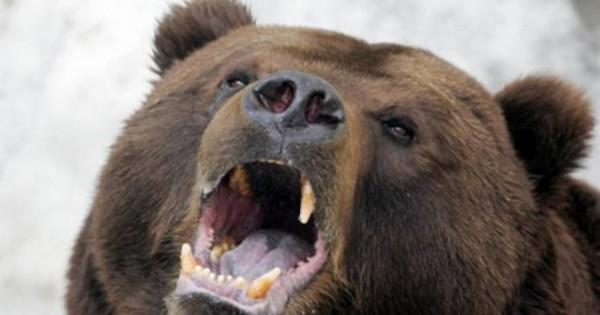 Μικρόσωμο σκυλί επιτέθηκε και κατατρόπωσε άγρια αρκούδα που είχε ορμήσει σε 2 αγοράκια