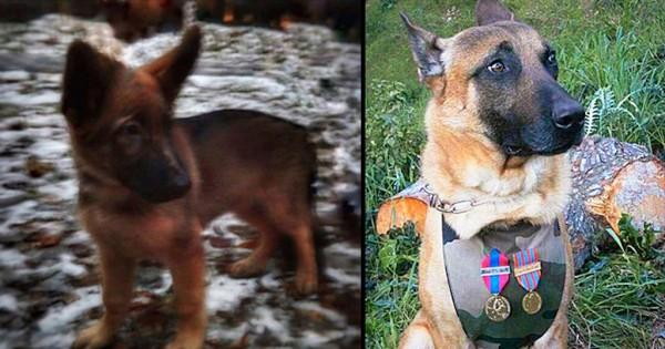 Η Ρωσία δωρίζει κουτάβι στην Γαλλία, για να αντικαταστήσει το ηρωικό σκυλί που σκοτώθηκε στην επιχείρηση της προηγούμενης εβδομάδας (Εικόνες)