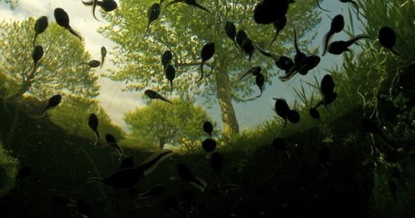 Η υπέροχη φύση όπως αποτυπώνεται στο φακό (Φωτογραφίες)