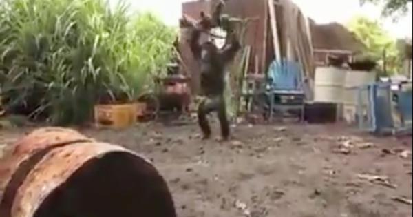 Πίθηκος «βουτάει» Καλάσνικοφ κι αρχίζει να πυροβολεί! Ευτυχώς δεν ήξερε να σημαδεύει (vid)
