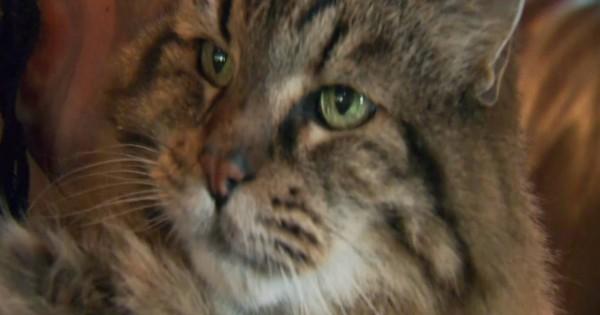 Στο βιβλίο των ρεκόρ Γκίνες ο γηραιότερος γάτος του κόσμου (Βίντεο)