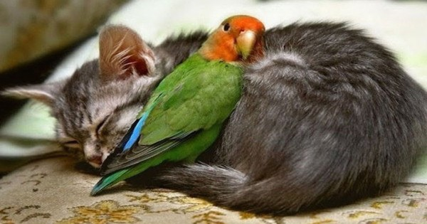 13 αγκαλιές ζώων που αποδεικνύουν ότι η αγάπη είναι τυφλή (Φωτογραφίες)