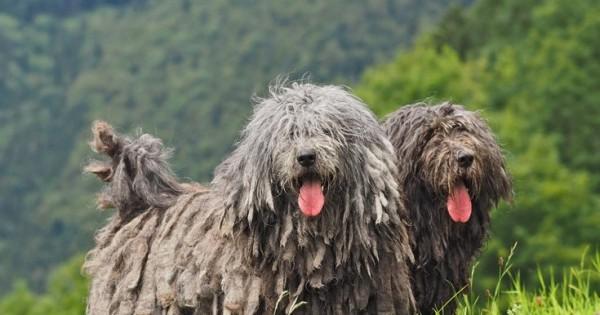 Επτά ράτσες σκύλων αποκαλύπτονται στις ΗΠΑ (Εικόνες)