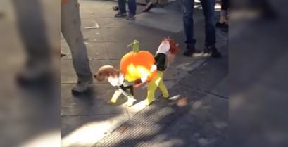 Ξεκαρδιστικό αποκριάτικο κοστούμι για ένα σκύλο (Βίντεο)