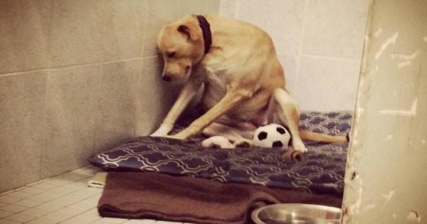 Το πιο θλιμμένο σκυλί στον κόσμο… ψάχνει μια οικογένεια για πάντα (φωτό)