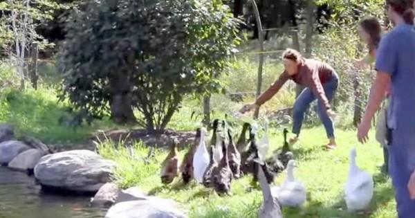 Έσωσαν αυτές τις πάπιες που δεν είχαν ξαναδεί νερό αλλά δεν περίμεναν αυτή την εξέλιξη (Βίντεο)
