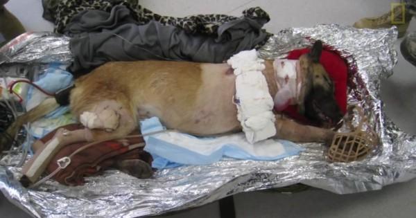 Αυτός ο σκύλος θυσιάστηκε για να σώσει την ομάδα του. Δείτε όμως πώς του το ανταπέδωσαν (Βίντεο)