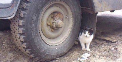 Tom & Jerry στην πραγματική ζωή (Βίντεο)