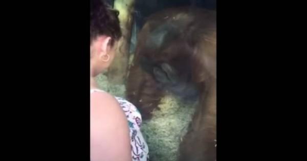 Βίντεο: Έγκυος γυναίκα έβαλε την κοιλιά της στο τζάμι και αυτό που έκανε ο πίθηκος θα σας αφήσει άναυδους!