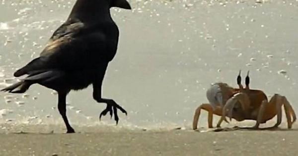 Κάβουρας – Κοράκια: Σημειώσατε ένα (video)