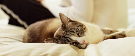 Έχετε γάτα; Διαβάστε τι σημαίνει αυτό για την προσωπικότητά σας (Βίντεο)