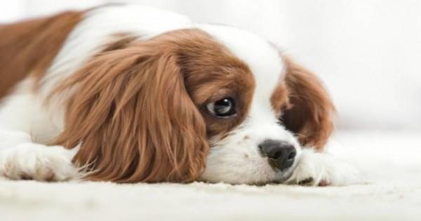 Προσοχή: Κοινή ουσία στις τσίχλες μπορεί να σκοτώσει το σκύλο σας