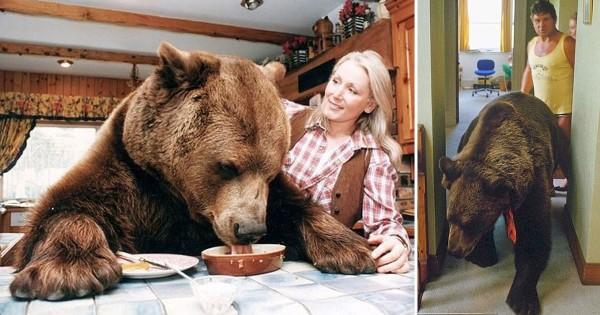 Το ζευγάρι από την Βρετανία που μεγάλωσε μια αρκούδα σαν παιδί τους. (Βίντεο)