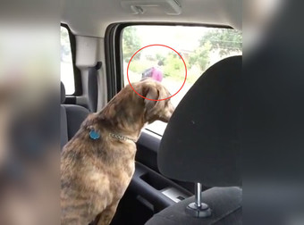 Αυτό το σκυλάκι δεν αντέχει να βλέπει τον καλύτερο της φίλο να φεύγει για το σχολείο κάθε μέρα το πρωί-Είναι τόσο γλυκό. (Βίντεο)