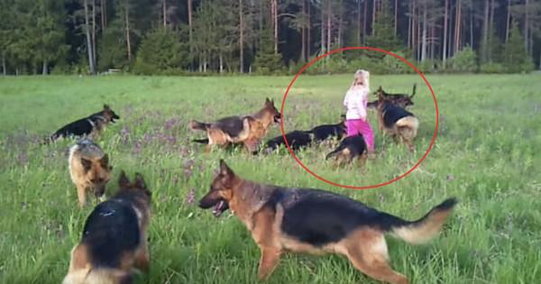 Όταν αυτό το κοριτσάκι έκανε βόλτα σε ένα χωράφι, περικυκλώθηκε από 14 τεράστια σκυλιά… (Βίντεο)