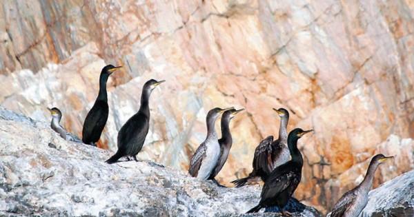 Το μικρό νησί του Αιγαίου που κατοικούν μόνο ζώα! (Εικόνες)