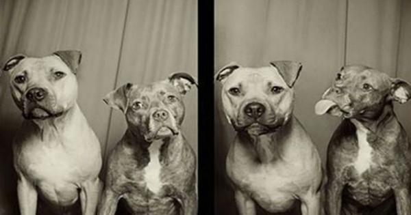 10 απίθανες φωτογραφίσεις σκύλων σε φωτογραφικό θάλαμο