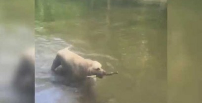 Ο σκύλος κάνει ένα εντυπωσιακό τρικ (Βίντεο)