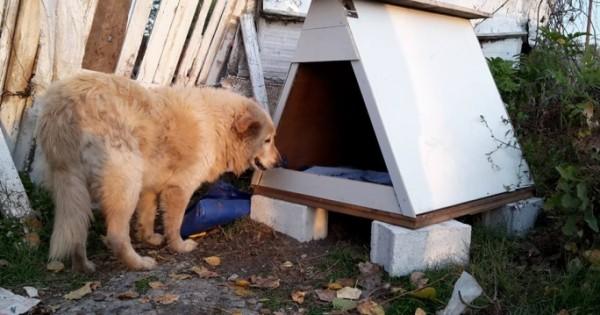Έφτιαξαν σπιτάκι στον ηλικιωμένο αδέσποτο σκυλάκο