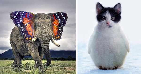 30 παράξενα υβρίδια ζώων φτιαγμένα στο… photoshop! (Εικόνες)