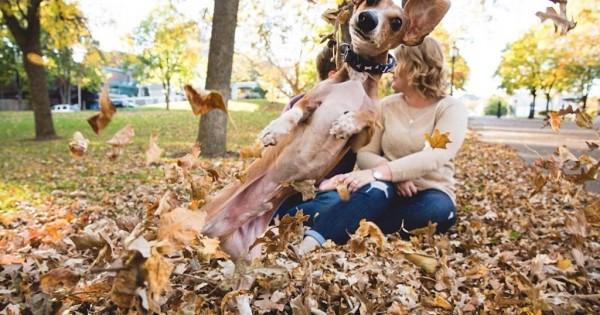 30 σκύλοι που ξέρουν να καταστρέφουν φωτογραφίες!