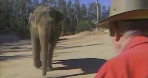 Εργαζόμενος σε τσίρκο συναντάει τον ελέφαντά του μετά από 15 χρόνια!