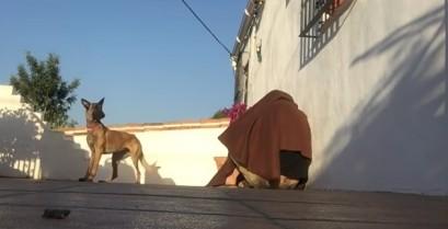 Έκπληξη στον σκύλο (Βίντεο)