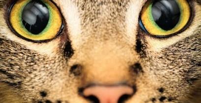Η όραση των ζώων (Βίντεο)